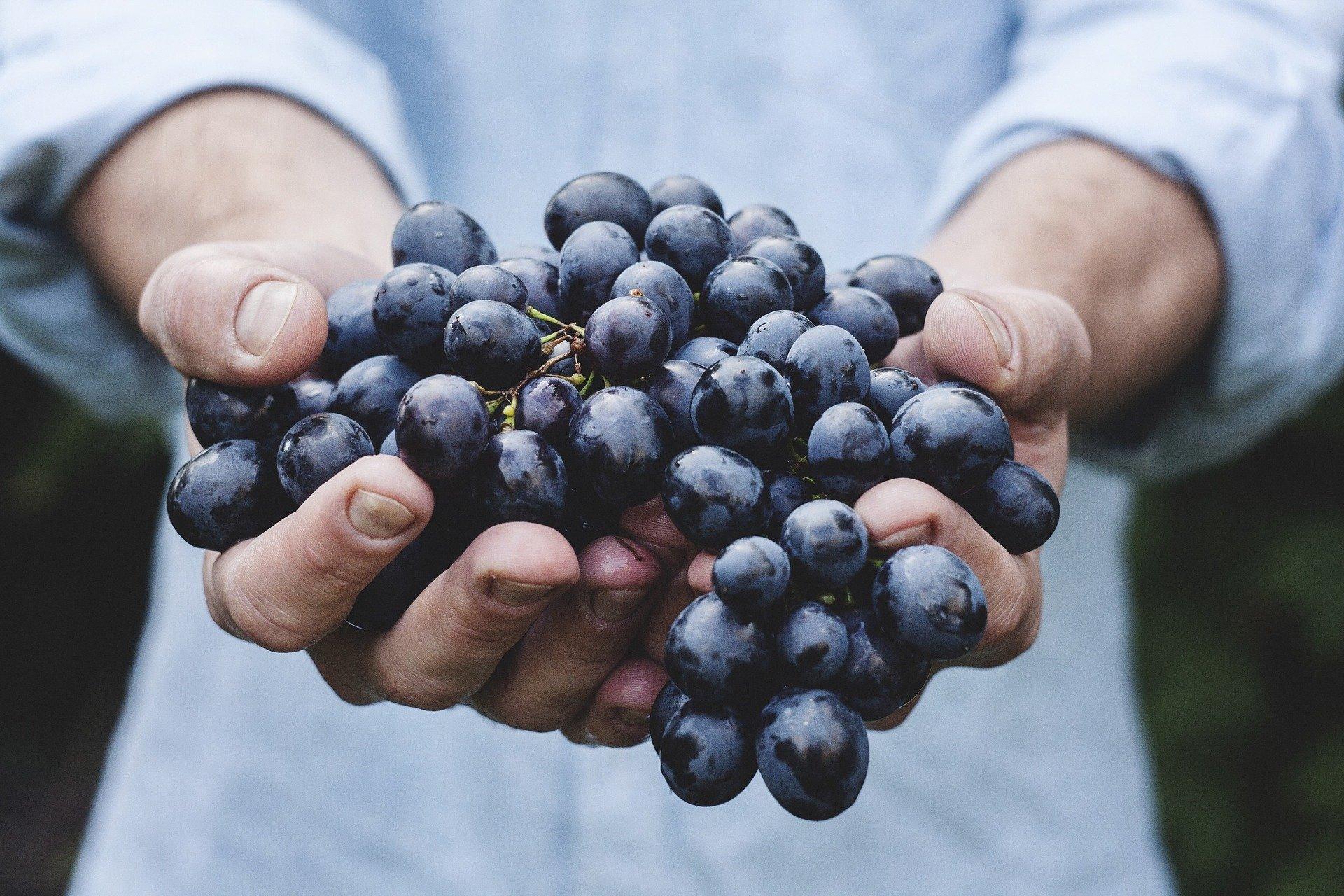 Il vino in Liguria